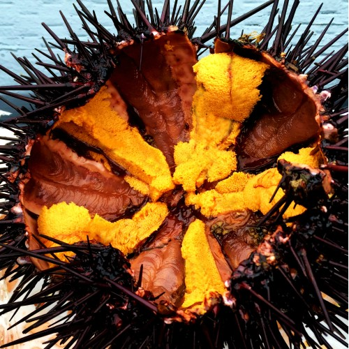 The same live sea urchin from above, cut open and ready to eat.